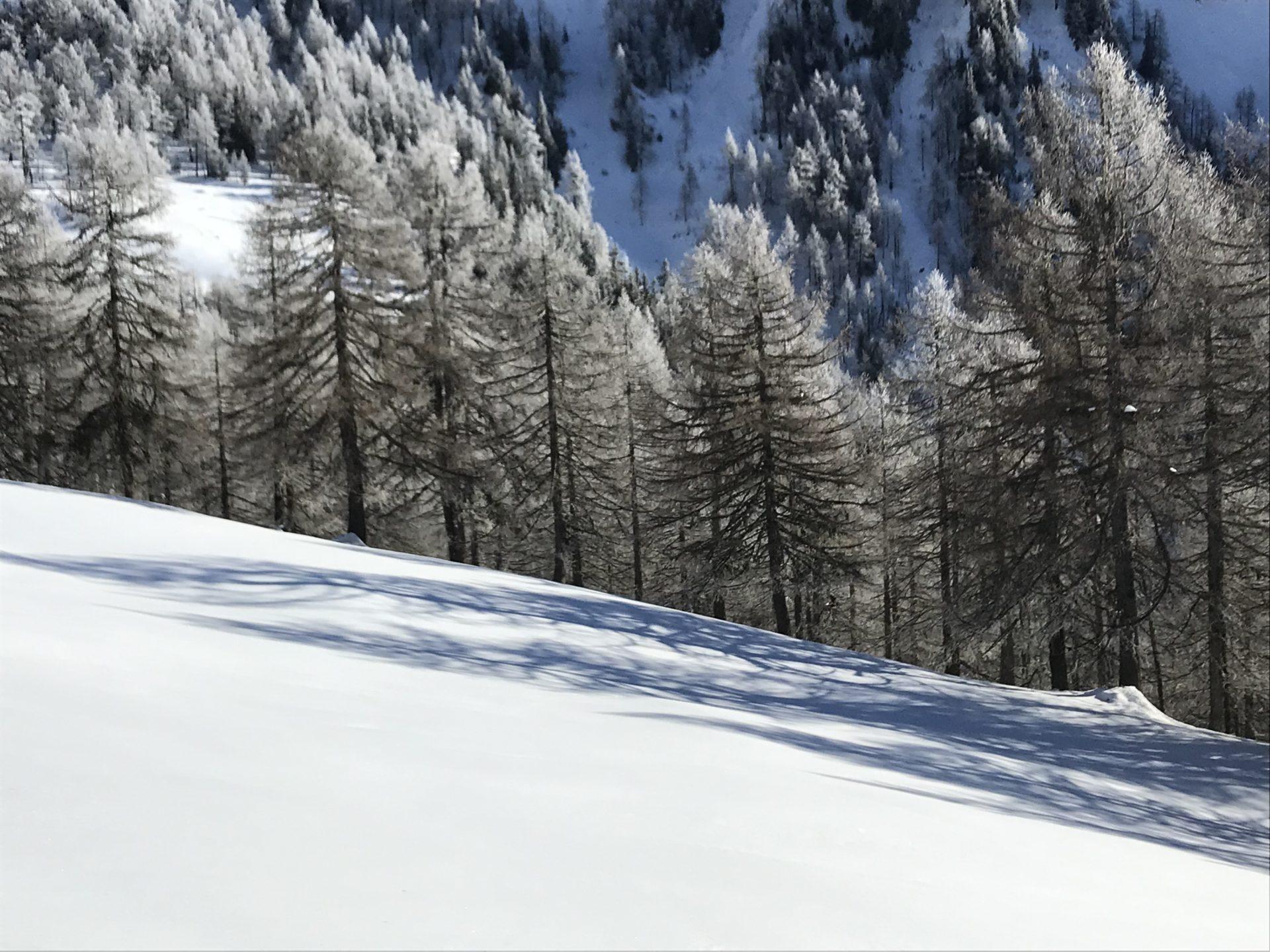 Alp Frid oberhalb Ernen
